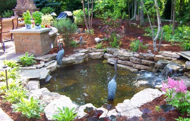 Beautiful koi pond for Koi pond videos