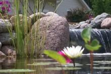 Colorful Aquatic Plant Life